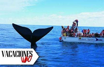 No Te Pierdas El Ver Las Ballenas Jorobadas Paga Rd 1 750 En Vez De Rd 3 900 Por Excursión Al Santuario A Ver Las Ballenas Jorobadas Visita Al Malecón De Samaná Tiempo De
